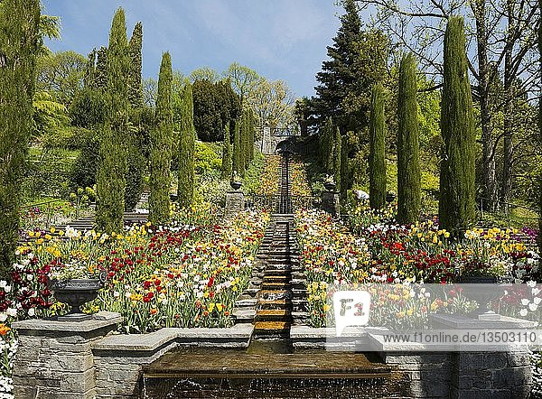 Treppe und Blumenbeete mit Tulpen im Frühling  Insel Mainau  Bodensee  Baden-Württemberg  Deutschland  Europa