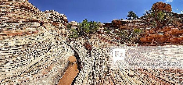 Stone desert landscape  The Needles  Canyonlands National Park  Moab  Utah  United States  North America