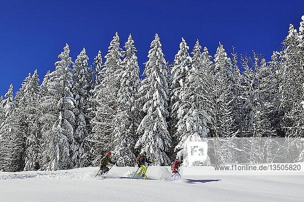 Schneeschuhwanderer vor verschneitem Wald auf dem Premium Winterwanderweg der Hemmersuppenalm  Reit im Winkl  Chiemgau  Bayern  Deutschland  Europa