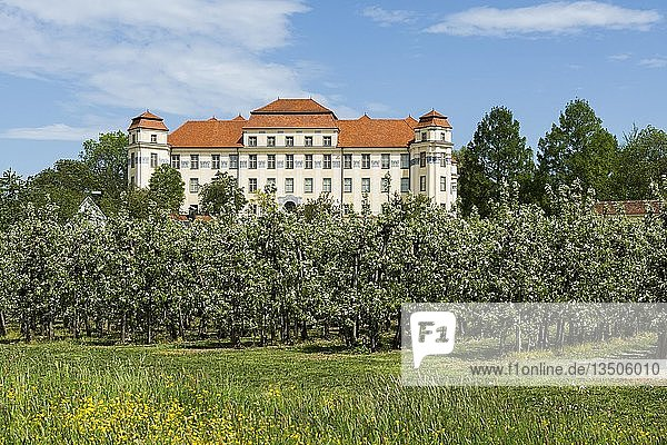 Neues Schloss und blühende Obstbäume  Tettnang  Oberschwaben  Bodenseeregion  Baden-Württemberg  Deutschland  Europa