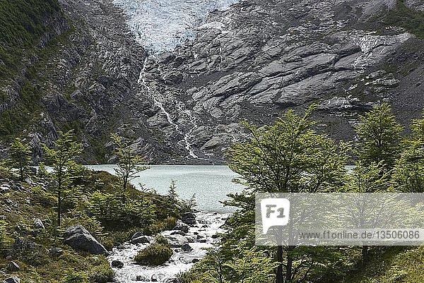 Schmelzender Gletscher mit See und Wald  Glaciar Huemulam Lago del Desierto  bei El Chalten  Patagonien  Argentinien  Südamerika