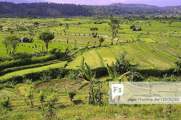 Reisfelder und Reisterrassen  Bali  Indonesien  Asien