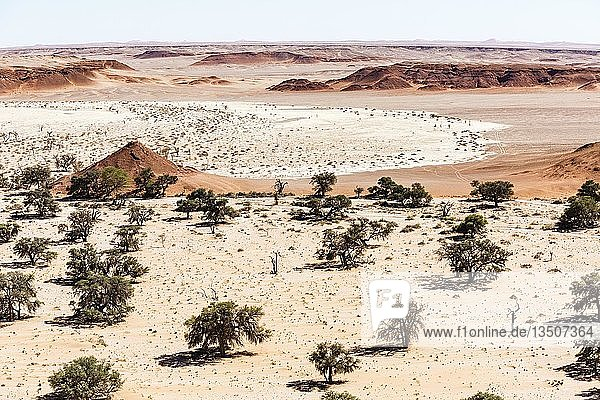 Luftaufnahme  Kameldornbäume (Acacia erioloba) in trockener Landschaft  Tsondabvlei  Namib-Wüste  Namib-Wüste  Namib-Naukluft-Nationalpark  Namibia  Afrika
