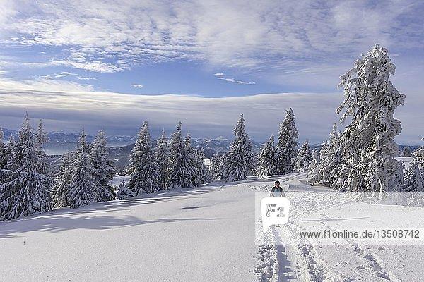 Aufstieg über den Blochboden  Schitour Unterberg  Pernitz  Niederösterreich  Österreich  Europa