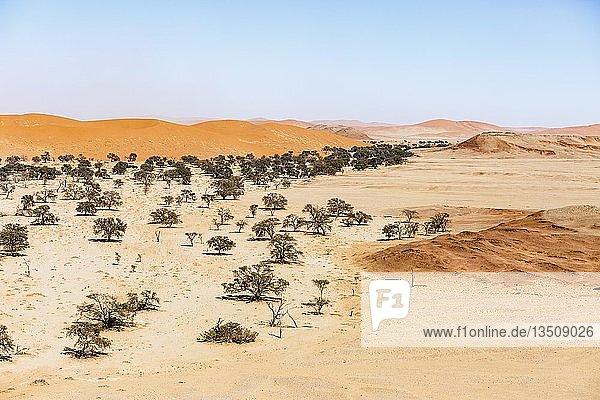 Luftaufnahme  Tsondab Trockenfluss  Dünenlandschaft  Namib-Naukluft-Nationalpark  Namibia  Afrika