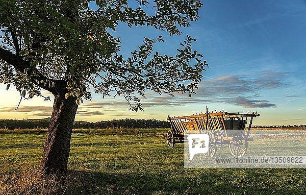 Heuwagen  Apfelbaum  Sonnenuntergang  Ebenheit  Sächsische Schweiz  Deutschland  Europa