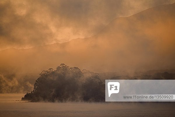 Sonnenaufgang über Bäumen mit Nebel am Lago Llanquihue  Puerto Varas  Patagonien  Carretera austral  Chile  Südamerika