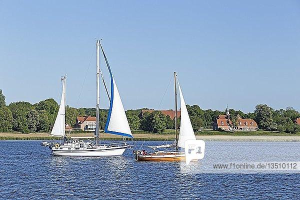 Segelboote auf der Schlei vor Gut Stubbe  Schleswig-Holstein  Deutschland  Europa