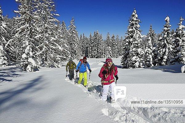 Schneeschuhtour auf das Fellhorn  Reit im Winkl  Bayern  Deutschland  Europa