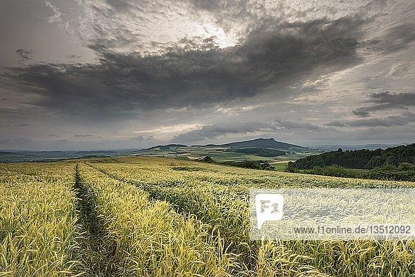 Sommerliche Gewitterstimmung mit Gerstenfeld (Hordeum vulgare)  am Horizont der Hohenstoffeln  Baden-Württemberg  Deutschland  Europa