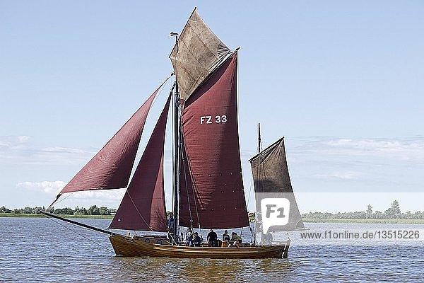 Zeesboot auf Saaler Bodden  Zeesbootregatta  Wustrow  Fischland  Mecklenburg-Vorpommern  Deutschland  Europa