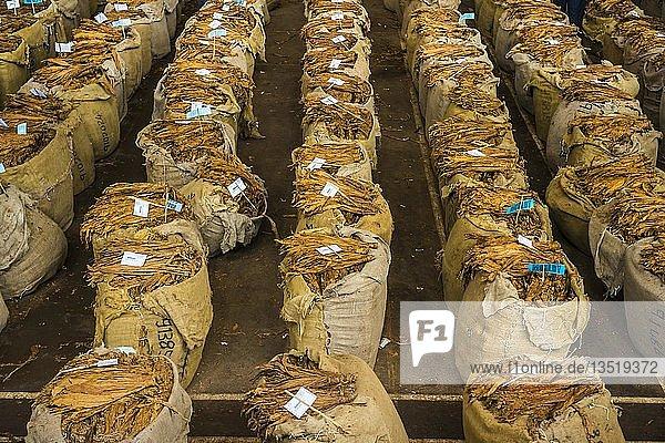 Riesige Säcke mit getrocknetem Tabak  Tabakauktion  Lilongwe  Malawi  Afrika