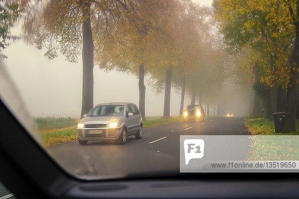Verkehr auf einer Landstraße an einem Herbstmorgen  Grevenbroich  Nordrhein-Westfalen  Deutschland  Europa