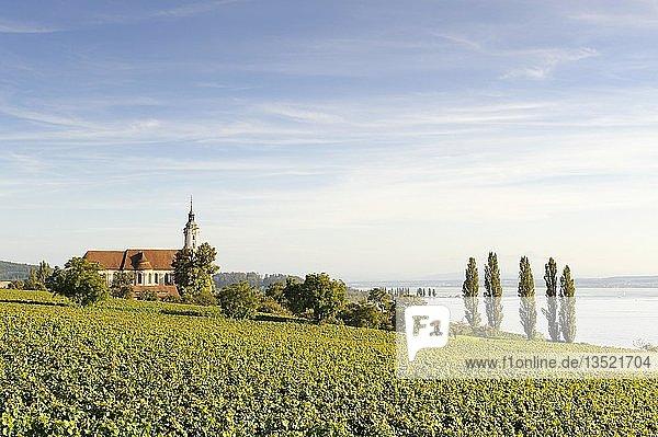 Die barocke Marienwallfahrtskirche in Birnau  umgeben von Weinreben  Bodenseekreis  Baden-Württemberg  Deutschland  Europa
