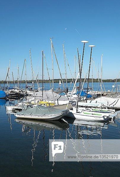 Zöbigker Hafen am Cospudener See  Neuseenland Leipzig  Markkleeberg  Sachsen  Deutschland  Europa