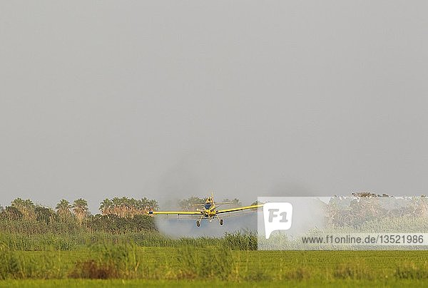 Flugzeug sprüht Insektenvernichtungsmittel auf die Reisfelder (Oryza sativa) und die umliegenden Feuchtgebiete  Juli  in der Umgebung des Naturparks Ebro-Delta  Provinz Tarragona  Katalonien  Spanien  Europa