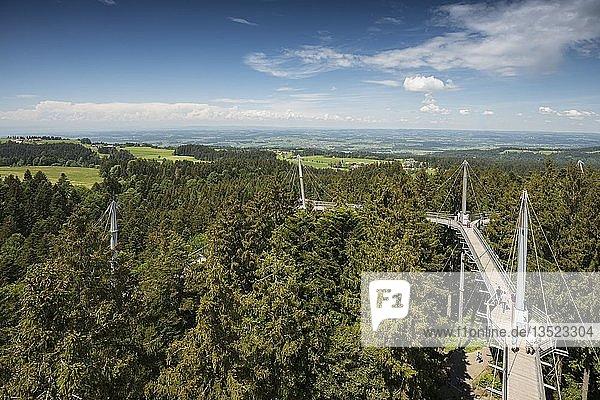 Baumwipfelpfad  Skywalk Allgäu  Scheidegg  Allgäu  Schwaben  Bayern  Deutschland  Europa
