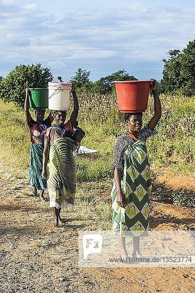 Einheimische Frauen mit Eimern auf dem Kopf  Malawi  Afrika