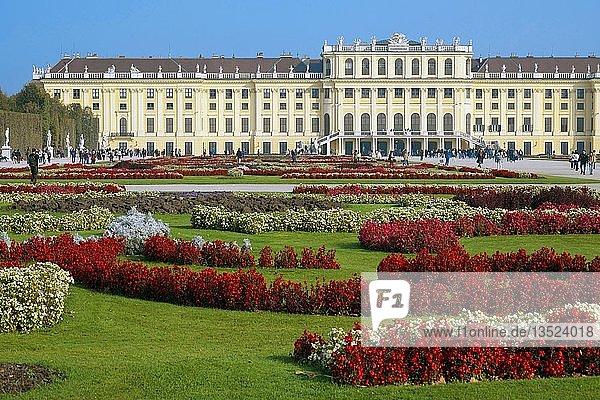 Schloss Schönbrunn mit Blumenrabatte  Wien  Österreich  Europa