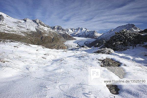 Aletschgletscher im frühen Winter  UNESCO Weltkulturerbe  Wallis  Schweiz  Europa