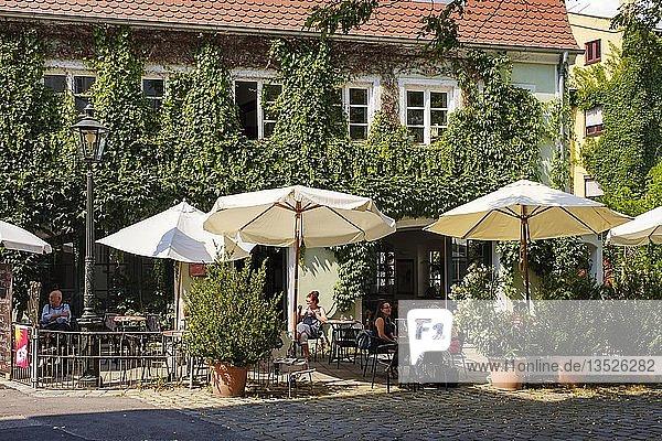 Begrüntes Café Rufus  Lechviertel  Augsburg  Schwaben  Bayern  Deutschland  Europa