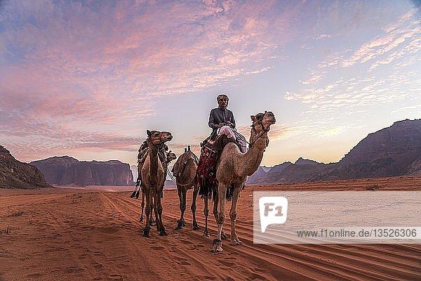 Beduine mit Kamelen iin der Wüste Wadi Rum  Jordanien  Asien