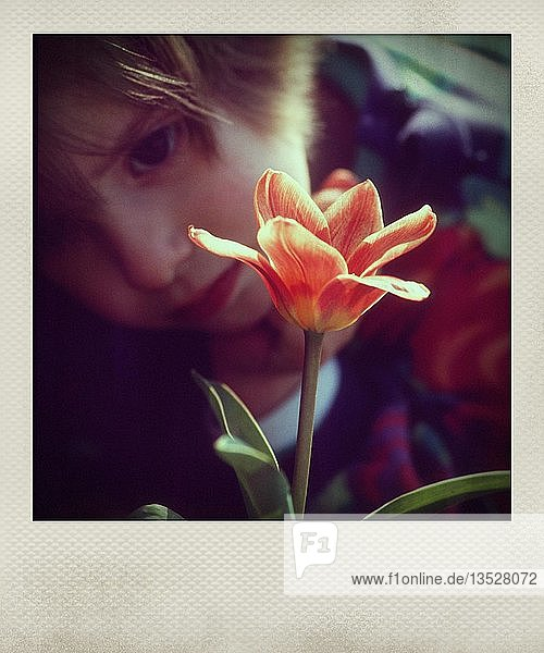 Little girl looking at a flower  France  Europe