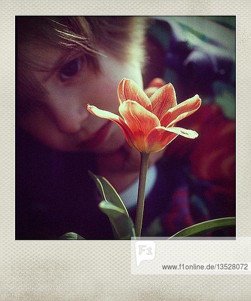 Kleines Mädchen begutachtet eine Blume  Frankreich  Europa