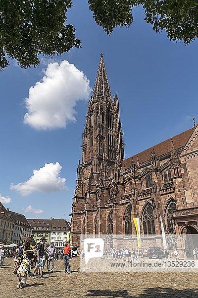 Freiburger Münster  Freiburg im Breisgau  Schwarzwald  Baden-Württemberg  Deutschland  Europa