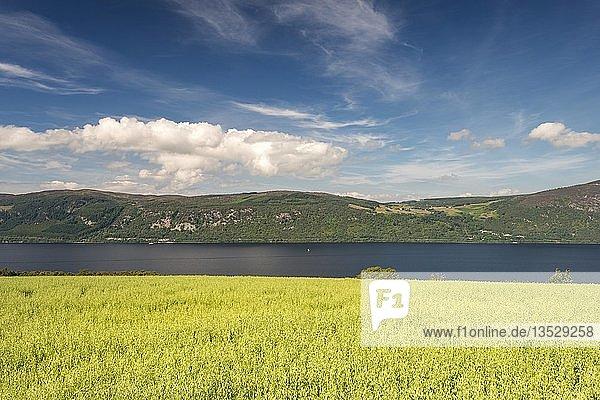 Blick über ein Haferfeld hinab zum Loch Ness  North West Highlands  Schottland  Großbritannien  Europa