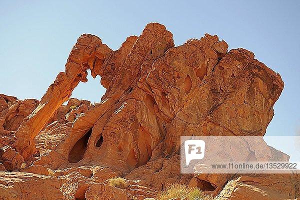 Elephant Rock im Abendlicht  Valley of Fire  Nevada  USA  Nordamerika