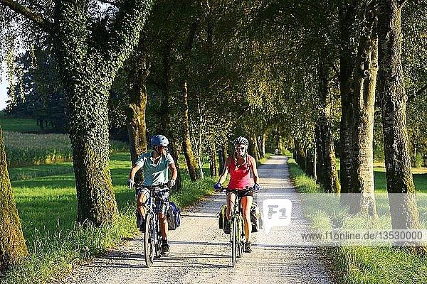 Radfahrer auf Chiemsee-Radweg bei Schafwaschen  Chiemgau  Oberbayern  Bayern  Deutschland  Europa