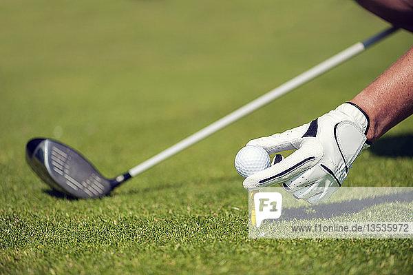 Hand mit Handschuhen setzt einen Golfball auf einen Tee  Golfclub Schloss Myllendonk  Korschenbroich  Nordrhein-Westfalen  Deutschland  Europa