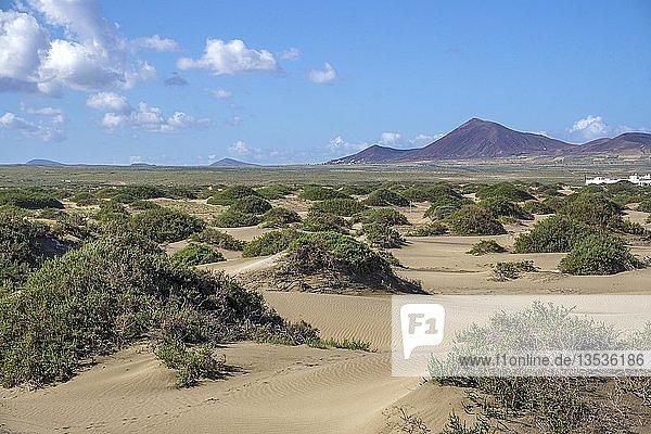 Sanddünen am Playa de San Juan  La Caleta de Famara  Lanzarote  Kanarische Inseln  Spanien  Europa