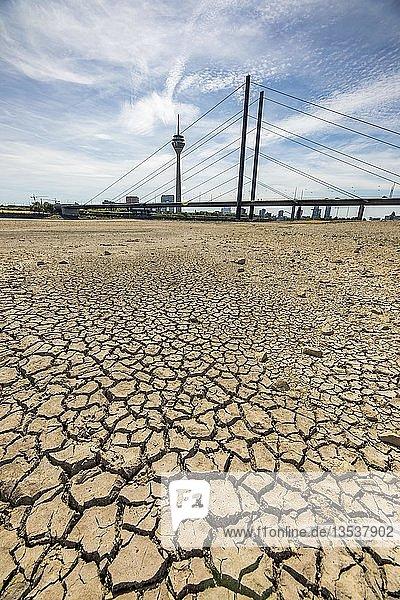 Rhein bei Düsseldorf  extremes Niedrigwasser  Rheinpegel bei 84 cm  nach der langen Dürre fällt das linke Rheinufer  bei Düsseldorf Oberkassel trocken  Rheinturm  Rheinkniebrücke  Düsseldorf  Nordrhein-Westfalen  Deutschland  Europa