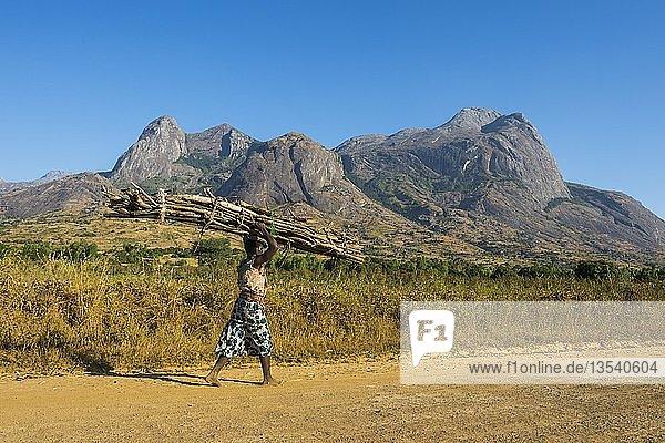 Mädchen mit viel Holz auf dem Kopf vor dem Berg Mulanje  Malawi  Afrika