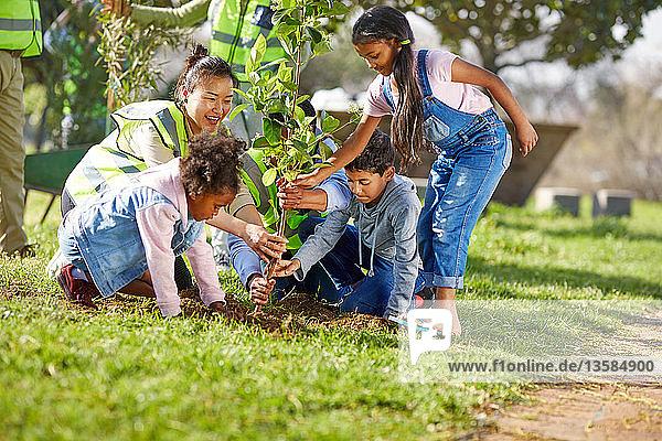 Kid volunteers helping plant tree ins sunny park