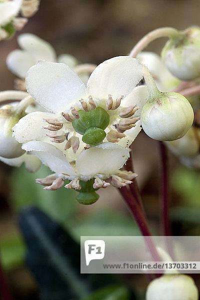 Blume,Botanik,Pflanze