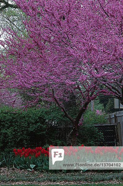 Baum,Blume,blühen,Botanik,Frühling,Garten
