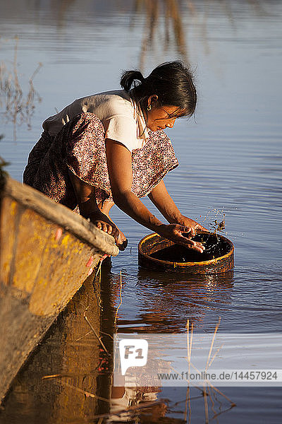 Woman doing the dishes in the Inle lake seated squatted on a boat  Nyaungshwe  Burma