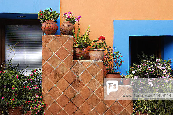 Topfpflanzen gegen bunte Wand