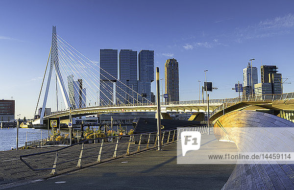 Erasmus Bridge (Erasmusbrug)  Rotterdam  Zuid Holland  Netherlands