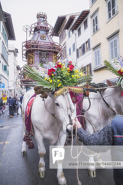 An ornate Ox cart for the Explosion of the Cart festival (Scoppio del Carro ) where on Easter Sunday a cart of pyrotechnics is lit  Florence  Tuscany  Italy
