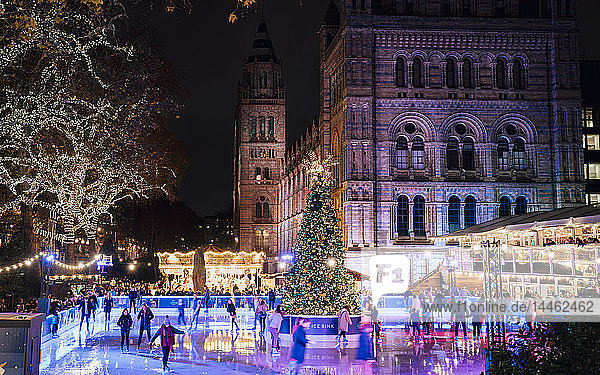 Christmas tree and ice skating rink at night outside the Natural History Museum  Kensington  London  England  UK
