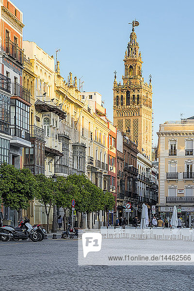 The Giralda Bell tower seen from San Francisco Square at sunset  Seville  Andalusia  Spain