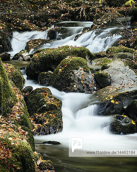 Stock Ghyll Force Waterfalls  Ambleside  Lake District National Park  UNESCO World Heritage Site  Cumbria  England  United Kingdom