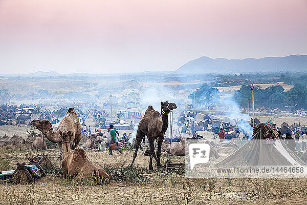 Pushkar Camel Fair  Pushkar  Rajasthan  India