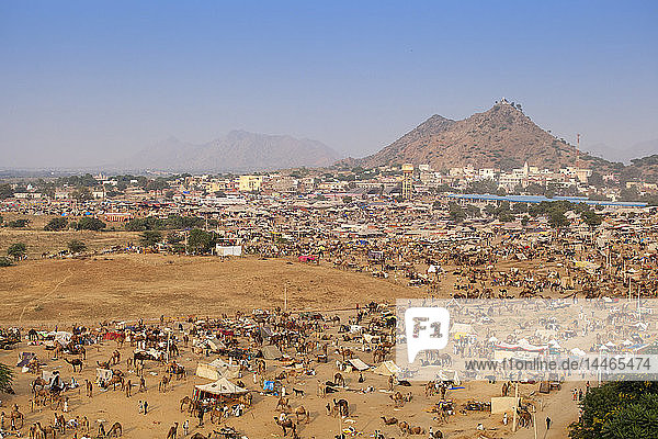 Aerial view of Pushkar Camel Fair  Pushkar  Rajasthan  India