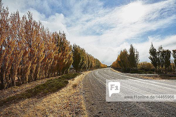 Argentina  Lago Posadas  gravel road with autumnal trees