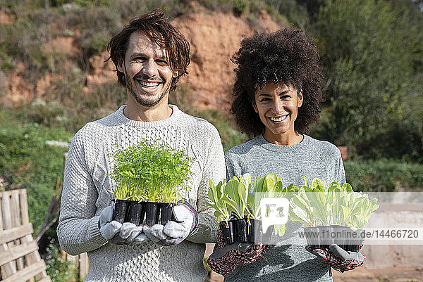 Happy couple holding lettuce seedlings in a vegetable garden